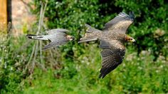 Discover more about York Bird of Prey Centre - one of the top attractions in Easingwold, North Yorkshire, including entry prices, opening hours, facilities and more. Stuff To Do, Things To Do, Family Days Out, Wildlife Park, Birds Of Prey, Yorkshire, Centre, Places To Visit, Falcons