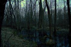 Dark Swamp | photo