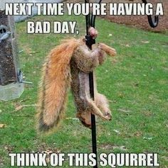 Poor Squirrel...just OWW! I think it passed out.  My dd and I are laughing so hard we are crying, but my son just let the room shaking his head at us.
