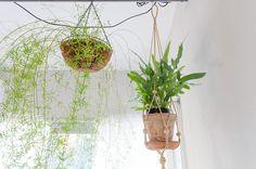アスパラガス・スプレンゲリーなど観葉植物も大切に育てている。