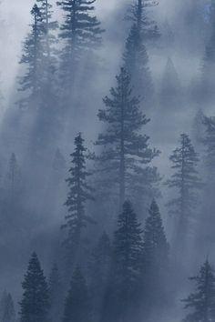 landscape trees blue & grey