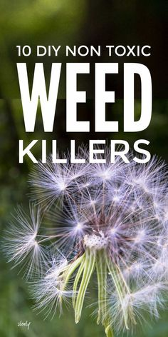 Non toxic DIY homemade weed killers that use natural, organic, pet friendly techniques to control weeds. These are the best ways to kill weeds that are soil, wildlife and pet safe. #weedkiller #organicweedkiller #nontoxicweedkiller #organicgardening #controlweeds Gardening For Beginners, Gardening Tips, Weed Killer Homemade, Perennial Ground Cover, Organic Weed Control, Weed Killers, Homestead Gardens, Weed Seeds, Living Off The Land