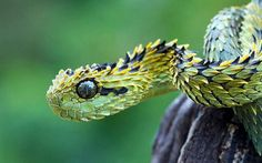 黄色と黒の美しい鱗を持つ鋭い目をした蛇のかっこいい写真壁紙画像
