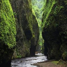 Fern Canyon, CA in the Redwoods -Jurrasic Park 2 was filmed here! This would be about a 7 hour drive each way for me, but it looks like it'll be worth it! The trails are not dog friendly though.