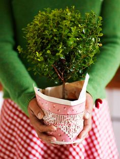 boxwood topiary - wonderful hostess gift