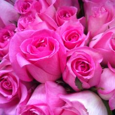 Hot Pink Roses <3 Gorge!
