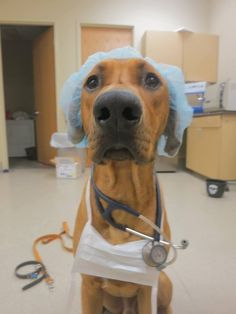 Doctor dog Halloween costume