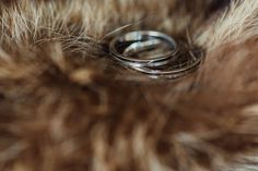 destination_wedding_photographer_land of white deer Wedding Engagement, Wedding Rings, Engagement Rings, Destination Wedding Photographer, Deer, Silver Rings, Jewelry, Enagement Rings, Jewlery