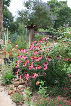 What most of us want in our Houston area gardens are low maintenance plants that are attractive and functional.