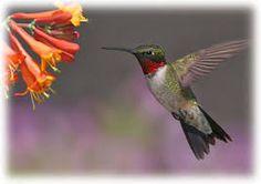 Resultado de imagen para aves de colombia en via de extincion