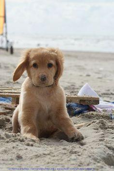 Puppy having a fun beach day....