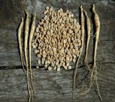 Ginseng seeds and ginseng rootlets for sale stratified and ready to plant ginseng seed and ginseng rootlets