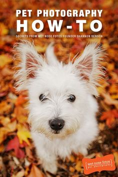 Pet Photography Ebook by Wet Nose Fotos. Learn how to take amazing photos of your four-legged best friend this Summer! #PetcoPlaylist @petco