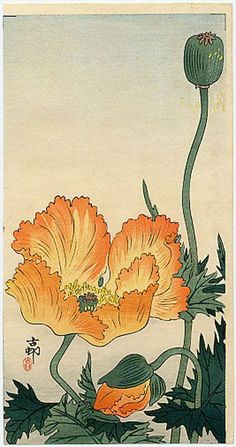 Orange Poppies, by Ohara Koson (Japan, Bird Illustration, Illustration Artists, Botanical Illustration, Illustrations, Botanical Drawings, Botanical Art, Ohara Koson, Art Chinois, Japanese Flowers