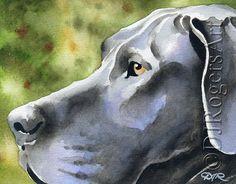 Grey GREAT DANE Dog Art Print Signed by Artist DJ Rogers