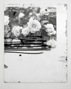 FACUNDO ARGAÑARAZ, ROSA ROSA 2013: acrylic and silkscreen.