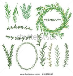 Image from http://thumb9.shutterstock.com/display_pic_with_logo/2640580/261392666/stock-vector-hand-drawn-set-of-rosemary-flowers-wreaths-and-decoration-elements-vector-illustration-261392666.jpg.