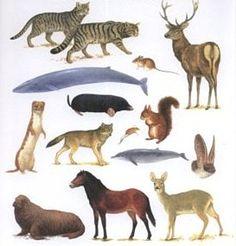 Tudo sobre os mamíferos! #mamiferos #aula #educação