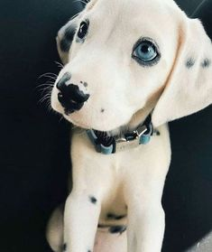 Unusual Looking Pets That Have Stolen Hearts Left And Right – Welpen Cute Little Animals, Cute Funny Animals, Beautiful Dogs, Animals Beautiful, Amazing Dogs, Cute Dogs And Puppies, Doggies, Cute Animals Puppies, Bulldog Puppies