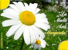 Felicitare de Florii cu mesajul La multi ani, Margareta! Daisy, Plants, Recherche Google, Google Search, Beauty, Daisies, Holidays Events, Bellis Perennis, Planters