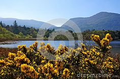 Photo about Amazing spring day at the lake. Image of kerry, beautiful, ireland - 53315430 Spring Day, Lake View, Opera House, Stock Photos, Mountains, Landscape, Amazing, Nature, Flowers