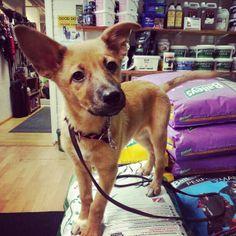 A dog named Bailey and Baileys horsefeeds Baileys, Dog Names, Corgi, Shop, Animals, Products, Corgis, Animales, Animaux