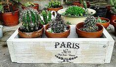 Vecchie scatole e cassettine come porta piante nello stile Shabby