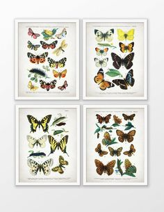 Butterfly Art Print Set of 4  Butterfly Decor  by InstantGraphics