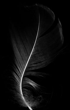 Fascinating Black and White Photography is trending these days and has become a symbol of subtle imagery. There are a number of B&W photography examples which can be explored in magazines and newspapers. Dark Photography, Black And White Photography, Simplicity Photography, Black Background Photography, Moonlight Photography, Feather Photography, Black N White, Black White Photos, Color Black