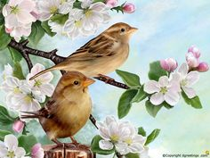Spruce up your screen with these lovely birds!
