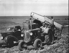 Women Harvesting Canning Peas, Umatilla County [Oregon], 1944. Marilyn Glenn was the truck driver, Pat Mann drove the tractor and Norma Mann, her sister-in-law, operated the loader.