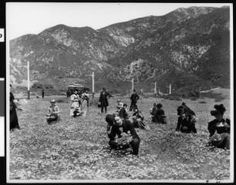 Group of sixteen people gathering poppies in a field in Altadena near Echo Mountain, ca.1904 :: California Historical Society Collection, 1860-1960