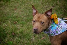 Elsie's a long timer with WCAC. She is currently still with the center as one of the longest residents. However, after this event she captured a foster's heart and is currently living in foster!