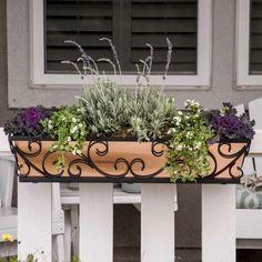 Balkon Bepflanzen Topfen Tulpen Lavendel