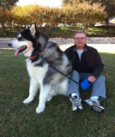 Skyland Malamutes... I want him to snuggle with me!! <3
