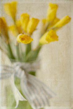 Daffodils ~ birthflower for the month of March