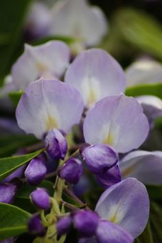 Hues of purple....