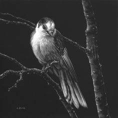 Realistic Bird Tattoo, Realistic Pencil Drawings, Girly Drawings, Art Drawings Sketches, Animal Drawings, Charcoal Sketch, Charcoal Art, Black Canvas Paintings, Illusion Drawings
