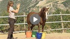Vorbereitende Übungen für das Verladen Exercise At Home, Horseback Riding, Searching, Love