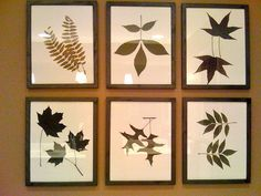 Wall art/ Leaves from the trees in my yard