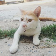 ชวงนนางนารกไมดอ 555 #cat #catinstagram #catlover #buzzlightyear  by tankung_hatori http://www.australiaunwrapped.com/