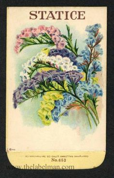 Stock, STATICE 653, Antique Seed Packet 1920's