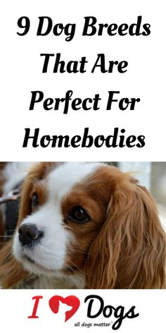 Love to stay in and snuggle with your dog? Then one of these breeds is the perfect match for you!