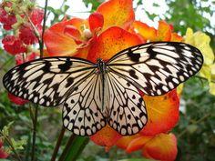 Delicate Black & White Butterfly via Romantic
