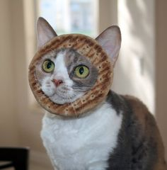 """catsamazing:  Cat breading? My cat is more of a PITA.  """