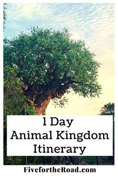 One day Animal Kingdom Itinerary at Disney World. Animal Kingdom tips, Animal Kingdom Touring Plan, Animal Kingdom 1 Day Plan Walt Disney World Vacations, Disney Trips, Discovery Island, Wilderness Explorer, Disney World Tips And Tricks, Day Plan, Animal Kingdom, Touring, How To Plan