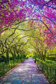 Spring, Central Park, New York City. This picture made me need to go to Central Park in the spring. I already think that it's beautiful, but this is just fantastically so. Places To Travel, Places To See, Time Travel, Beautiful World, Beautiful Places, Wonderful Places, Amazing Things, Simply Beautiful, Beautiful Park