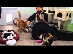 BLINDCAT RESCUE AND SANTUARY  Please watch and share  So Cute