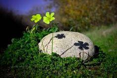 Bilderesultat for macro flower photography Nature Pictures, Cute Pictures, Macro Flower, Macro Photography, Flower Photography, Creative Photos, Big Sur, Natural World, Flowers