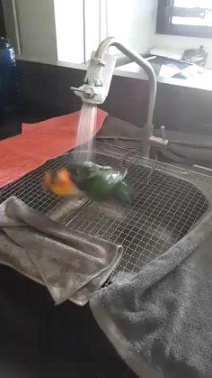 Funny Birds, Cute Birds, Birds 2, Angry Birds, Cute Animal Videos, Funny Animal Pictures, Funny Photos, Cute Little Animals, Cute Funny Animals